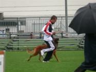 Mistrovství světa FCI ve výkonu psů pracovních plemen 2009 č.14