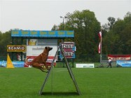 Mistrovství světa FCI ve výkonu psů pracovních plemen 2009 č.15