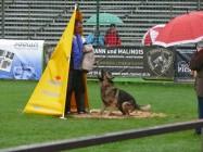 Mistrovství světa FCI ve výkonu psů pracovních plemen 2009 č.17