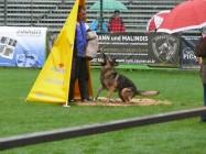 Mistrovství světa FCI ve výkonu psů pracovních plemen 2009 č.18