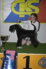 Mezinárodní výstava psů PRAHA 2006