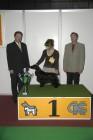 XIII. Mezinárodní výstava psů PRAHA 2007