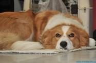 XVI. Mezinárodní výstava psů PRAHA 2008