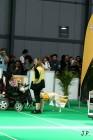 XVII. Mezinárodní výstava psů PRAHA 2009