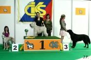 XVII. Mezinárodní výstava psů PRAHA 2009 č.12