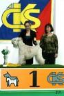 XVII. Mezinárodní výstava psů PRAHA 2009 č.13