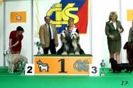 XVII. Mezinárodní výstava psů PRAHA 2009 č.14
