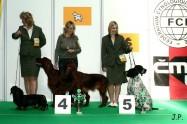 XVII. Mezinárodní výstava psů PRAHA 2009 č.15