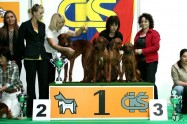 XVII. Mezinárodní výstava psů PRAHA 2009 č.16