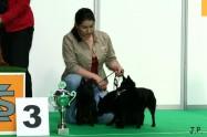 XVII. Mezinárodní výstava psů PRAHA 2009 č.18