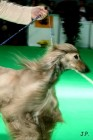 XVII. Mezinárodní výstava psů PRAHA 2009 č.20