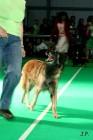 XVII. Mezinárodní výstava psů PRAHA 2009 č.21