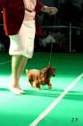 XVII. Mezinárodní výstava psů PRAHA 2009 č.22