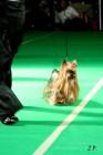 XVII. Mezinárodní výstava psů PRAHA 2009 č.23