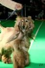 XVII. Mezinárodní výstava psů PRAHA 2009 č.24