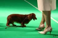 XVII. Mezinárodní výstava psů PRAHA 2009 č.26