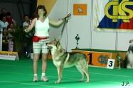 XVII. Mezinárodní výstava psů PRAHA 2009 č.27