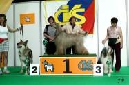 XVII. Mezinárodní výstava psů PRAHA 2009 č.28