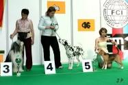 XVII. Mezinárodní výstava psů PRAHA 2009 č.29