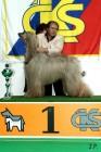 XVII. Mezinárodní výstava psů PRAHA 2009 č.30