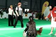 XVII. Mezinárodní výstava psů PRAHA 2009 č.31