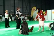 XVII. Mezinárodní výstava psů PRAHA 2009 č.32