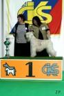 XVII. Mezinárodní výstava psů PRAHA 2009 č.33