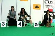 XVII. Mezinárodní výstava psů PRAHA 2009 č.34