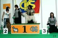XVII. Mezinárodní výstava psů PRAHA 2009 č.35