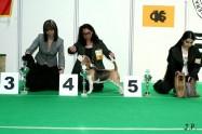 XVII. Mezinárodní výstava psů PRAHA 2009 č.36