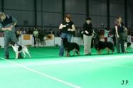 XVII. Mezinárodní výstava psů PRAHA 2009 č.38