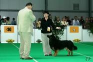 XVII. Mezinárodní výstava psů PRAHA 2009 č.43