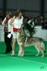 XVII. Mezinárodní výstava psů PRAHA 2009 č.44