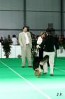 XVII. Mezinárodní výstava psů PRAHA 2009 č.45
