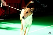 XVII. Mezinárodní výstava psů PRAHA 2009 č.50