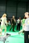 XVII. Mezinárodní výstava psů PRAHA 2009 č.51