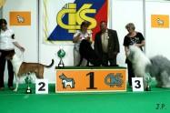 XVII. Mezinárodní výstava psů PRAHA 2009 č.53
