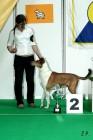 XVII. Mezinárodní výstava psů PRAHA 2009 č.56