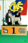 XVII. Mezinárodní výstava psů PRAHA 2009 č.59