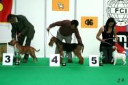 XVII. Mezinárodní výstava psů PRAHA 2009 č.60