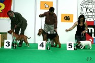 XVII. Mezinárodní výstava psů PRAHA 2009 č.61