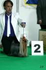 XVII. Mezinárodní výstava psů PRAHA 2009 č.62