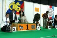XVII. Mezinárodní výstava psů PRAHA 2009 č.63