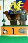 XVII. Mezinárodní výstava psů PRAHA 2009 č.69