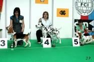 XVII. Mezinárodní výstava psů PRAHA 2009 č.70