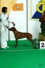 XVII. Mezinárodní výstava psů PRAHA 2009 č.71