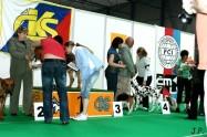 XVII. Mezinárodní výstava psů PRAHA 2009 č.72
