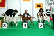 XVII. Mezinárodní výstava psů PRAHA 2009 č.74