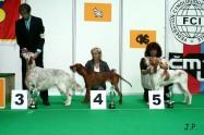 XVII. Mezinárodní výstava psů PRAHA 2009 č.77