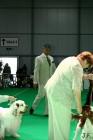 XVII. Mezinárodní výstava psů PRAHA 2009 č.78